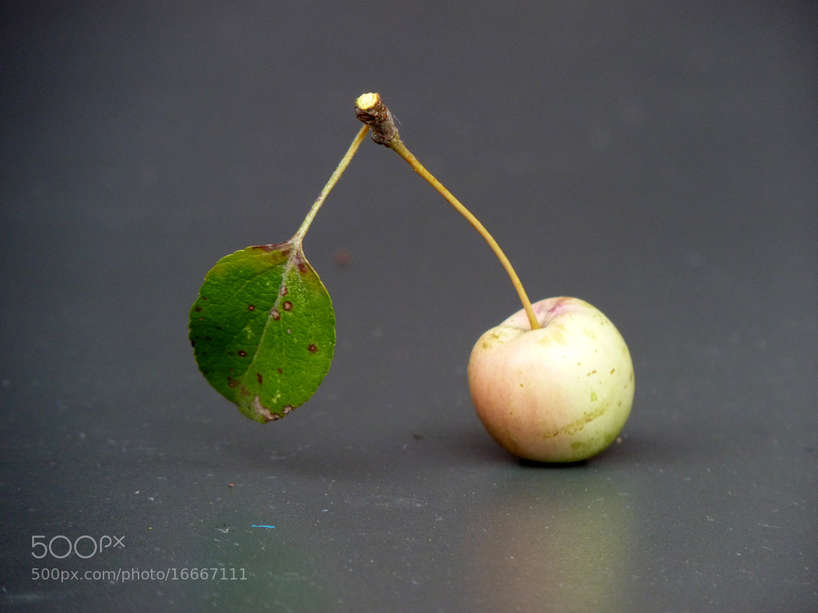 Photograph The very little apple by MAURIZIO PONTINI on 500px