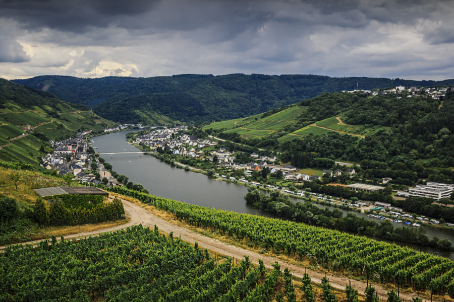 Vineyards in the Moselle Valley, Zell, Germany by Son of the Morning Light on 500px.com