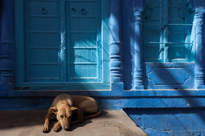 Photograph Blue by Marji Lang on 500px