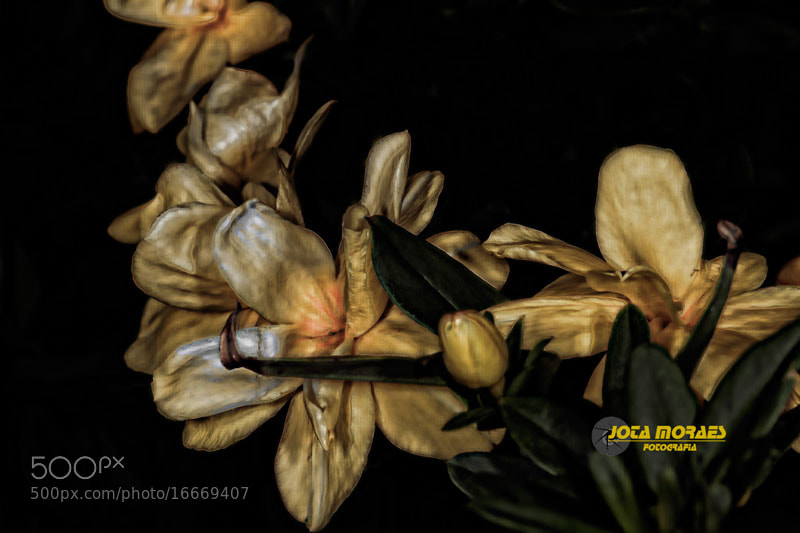 Photograph Old bouquet by jota moraes on 500px