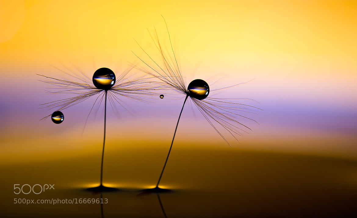 Photograph Martians by Miki Asai on 500px