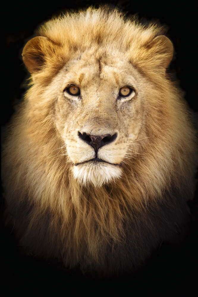 Photograph Portrait of a King by Mario Moreno on 500px