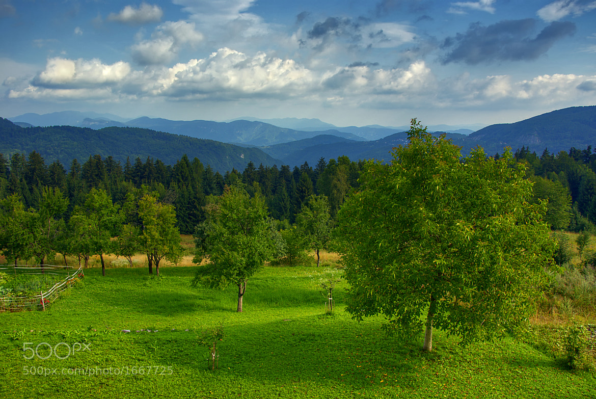 Photograph Green morning by Boris Frkovic on 500px