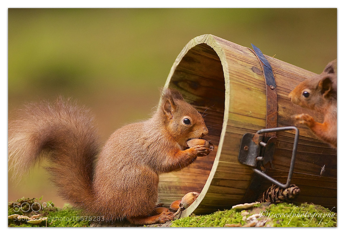 Photograph OI Get off my NUTS…….!! by Jason Wood on 500px