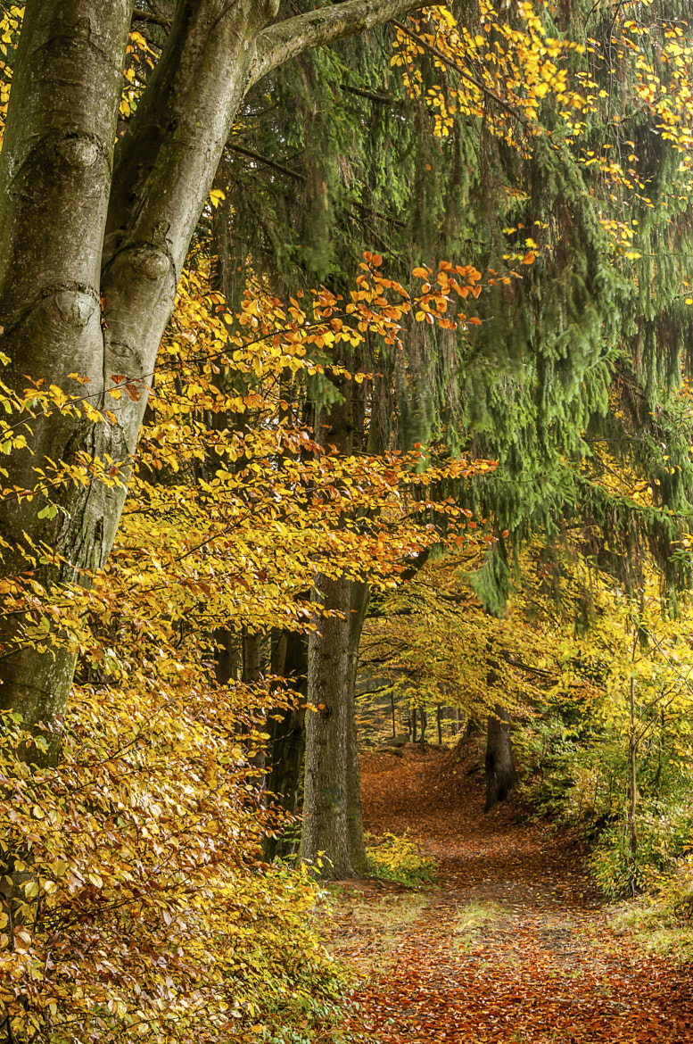 Photograph Herbstweg by Leo Pöcksteiner on 500px