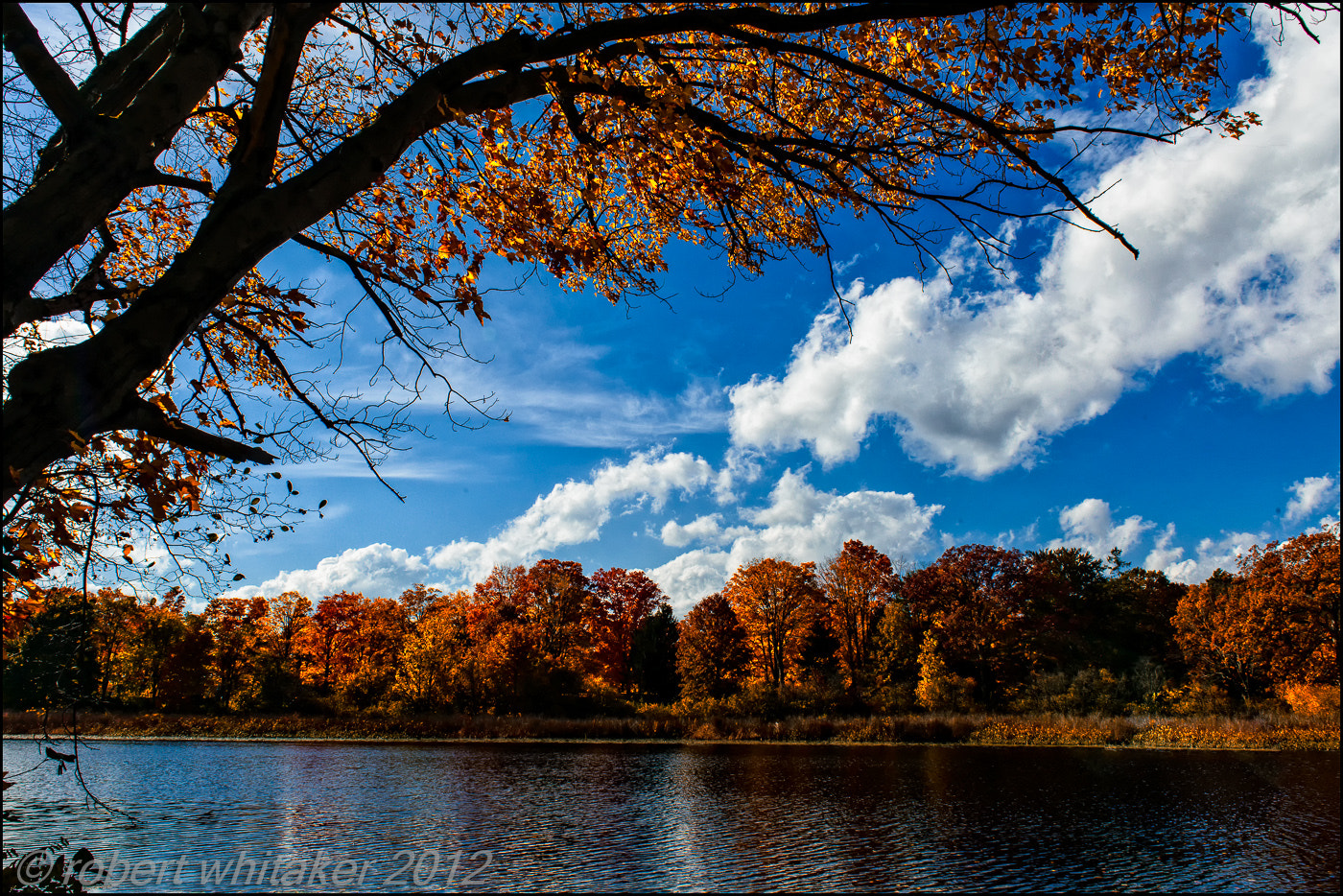 Photograph Boston Fall Colors by Robert Whitaker on 500px