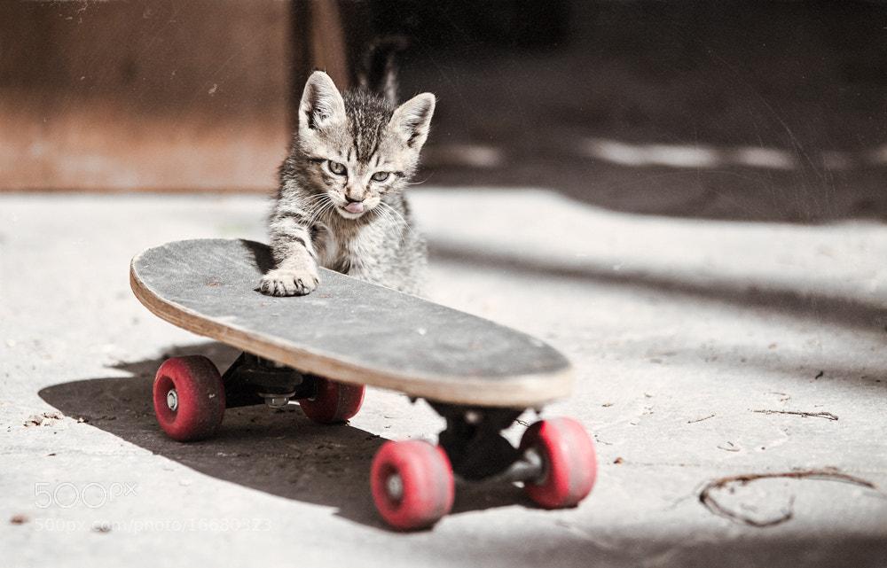 Photograph Skittyboard by Biel Grimalt on 500px