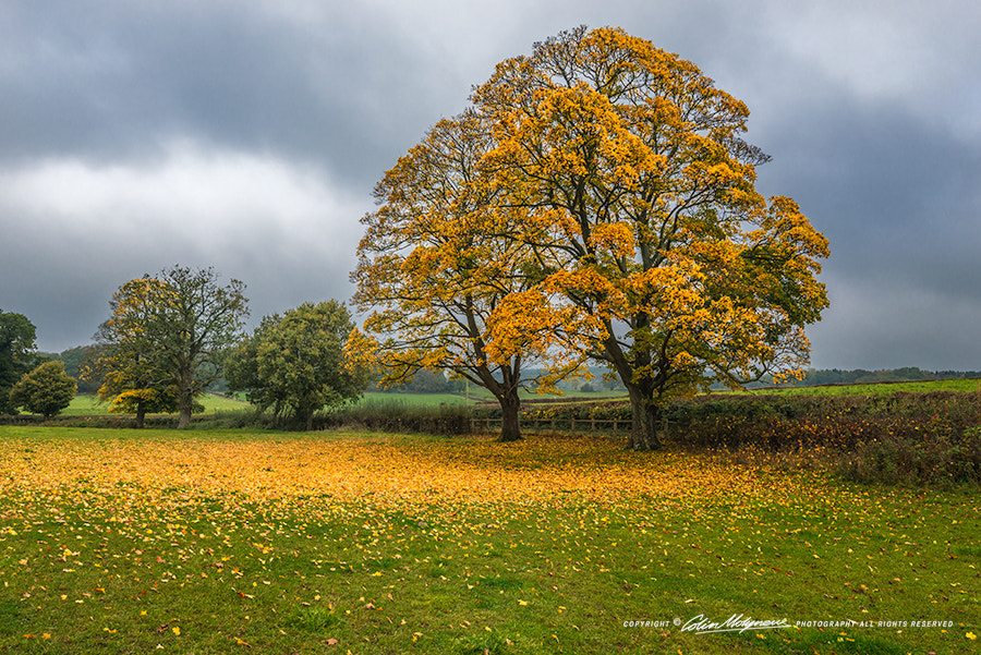 Photograph AUTUMN LEAVES by COLIN MOLYNEUX on 500px