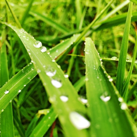 raining grass
