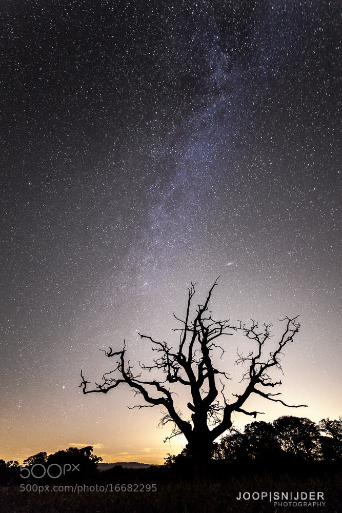 Photograph Creepy Tree by Joop Snijder on 500px