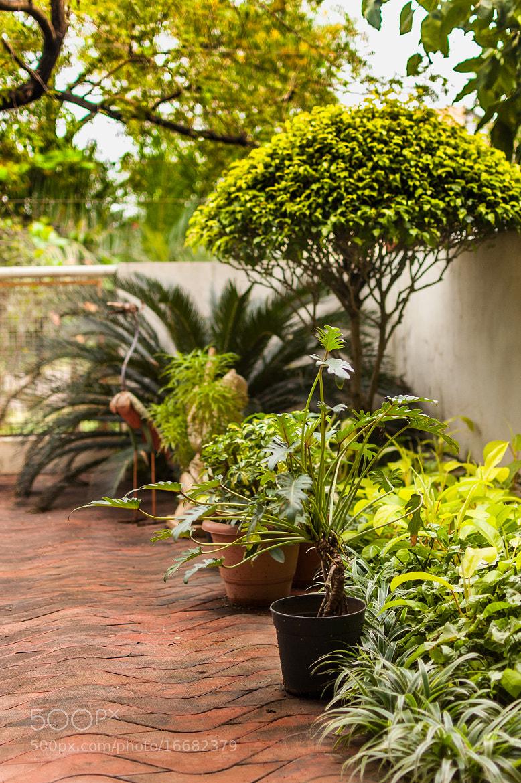 Photograph Terrace Garden by Pratik  on 500px