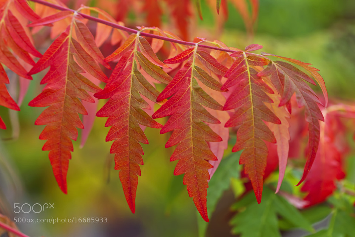 Photograph Fall's Laundering by Renae Smith on 500px
