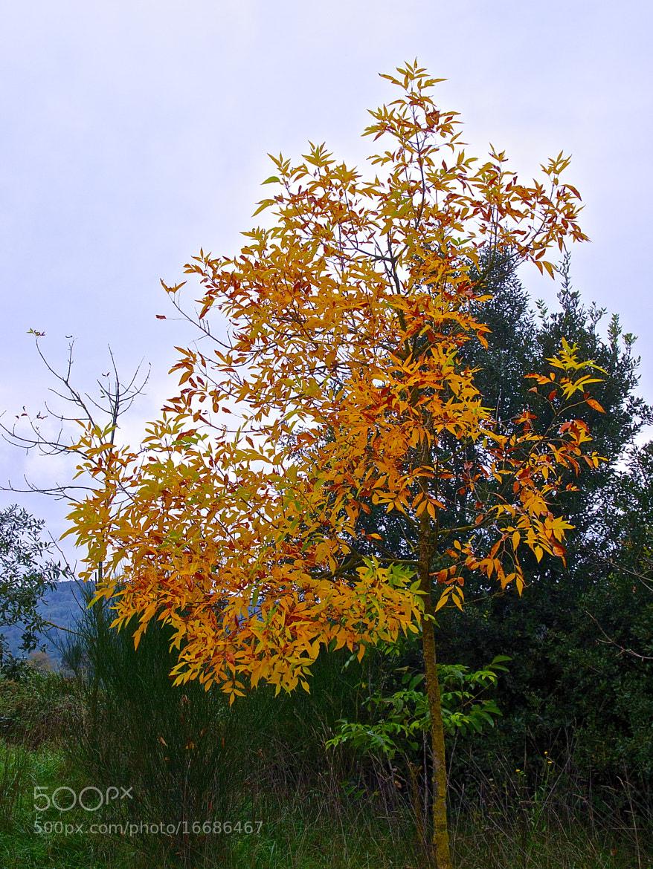 Photograph Autumn by Jordi Killswitch Diamond on 500px
