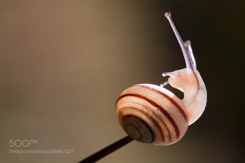 Photograph escargot by Cheype Sébastien on 500px