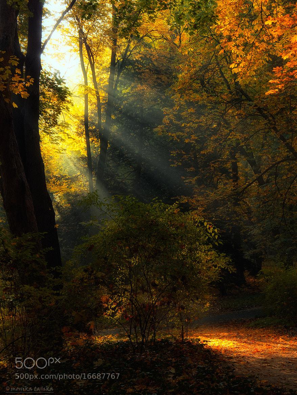 Photograph Autumn... by Monika Tańska on 500px