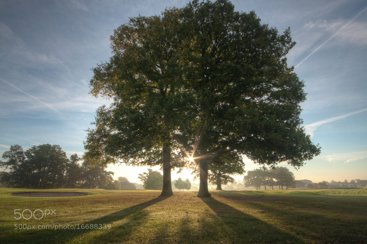Photograph through the trees by Karl Batchelor on 500px
