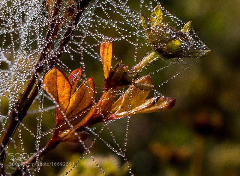 Photograph Nature decoration by Lada Jermolajeva on 500px