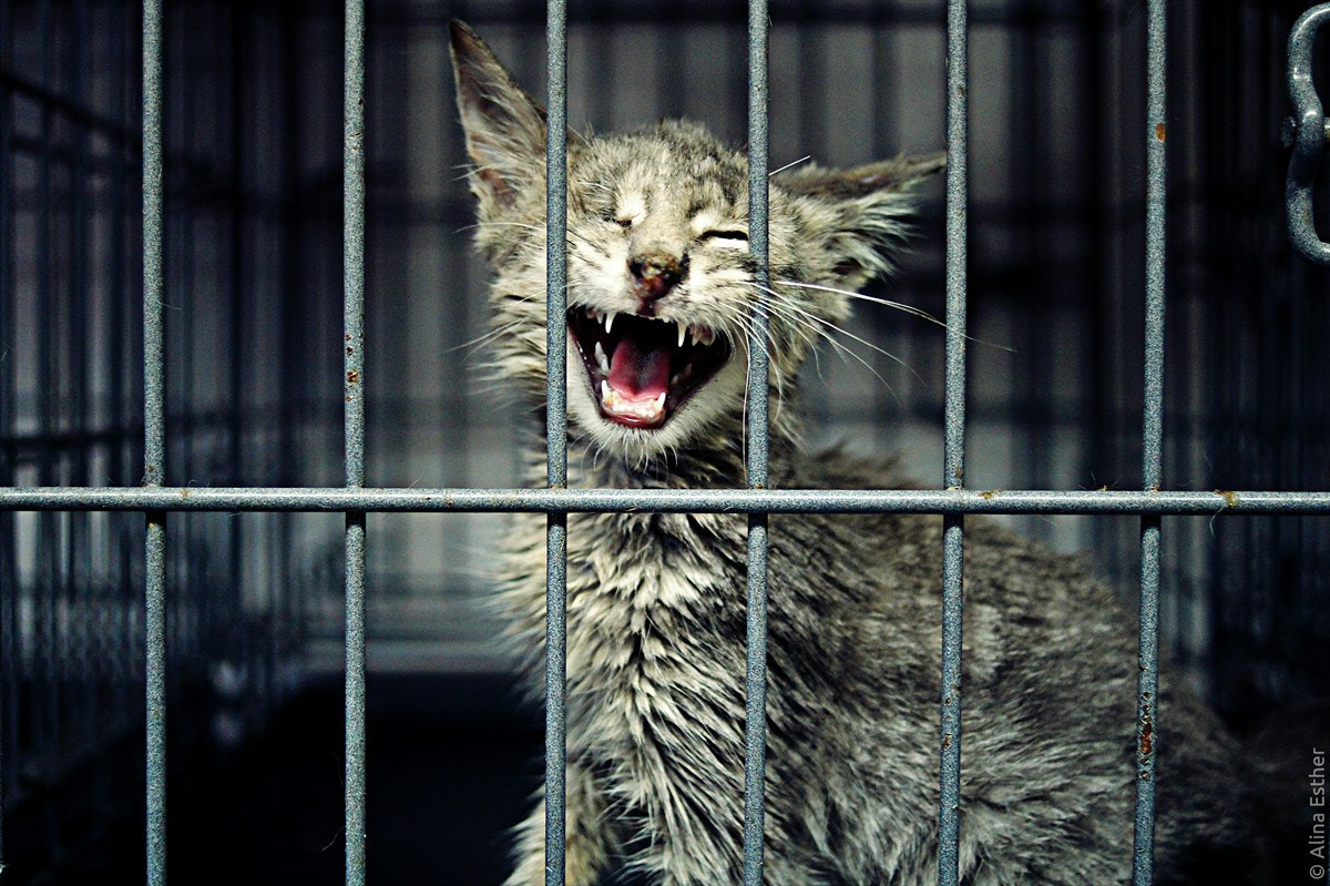 Photograph prisoner by Alina Esther on 500px