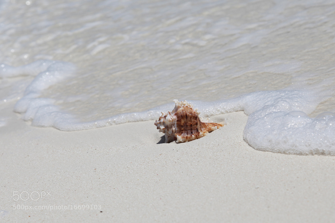 Photograph shell on the beach by Mohamed Abdulla Shafeeg on 500px
