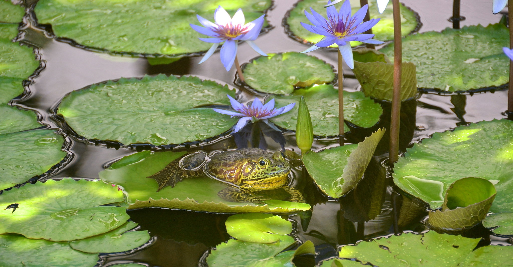 Photograph Frog Pond by David Tapia on 500px