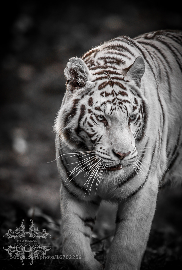 Photograph The White One I by Philipp Wedel on 500px
