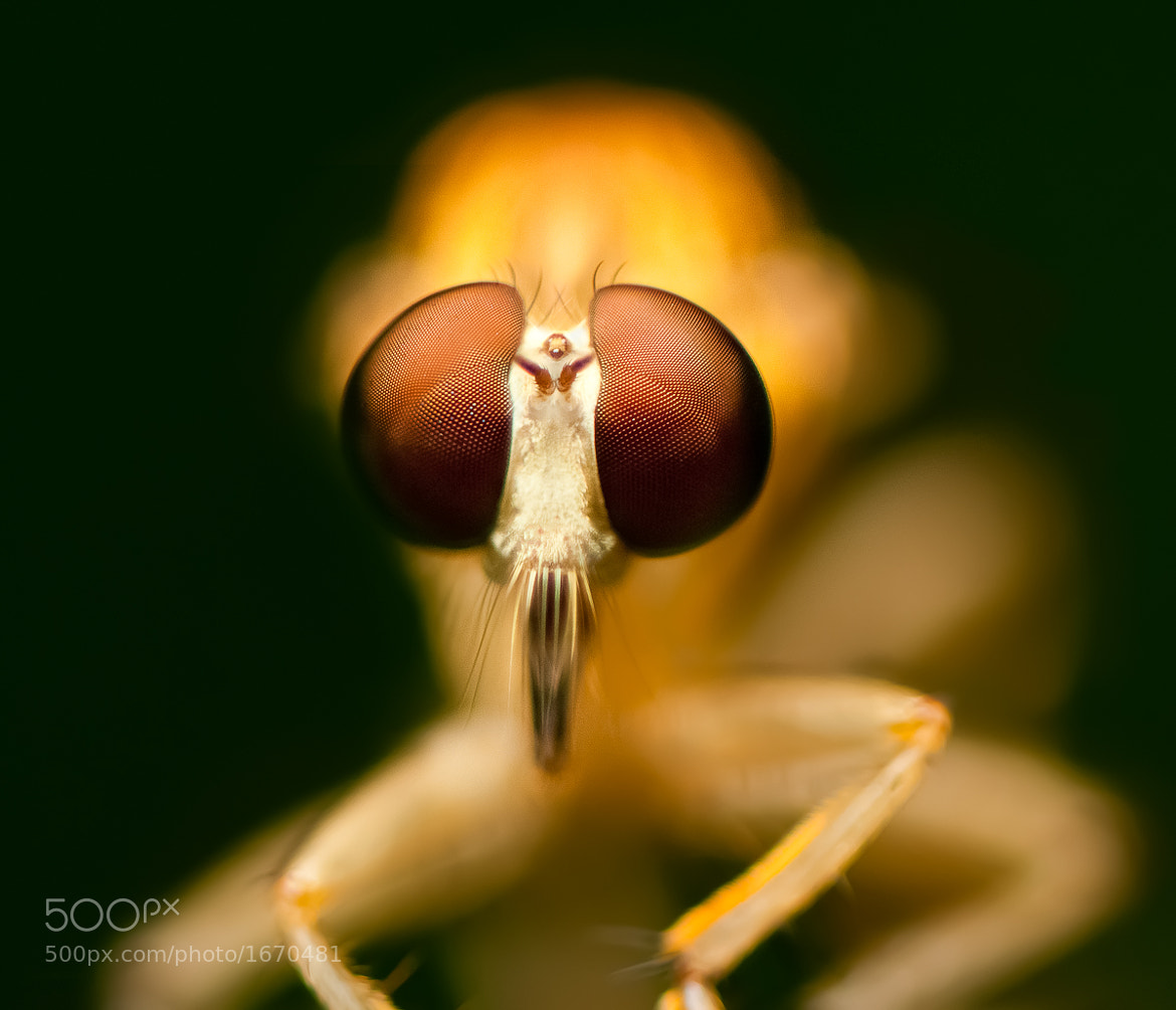 Photograph Rubber fly by Mojtaba Zeinalzadegan on 500px
