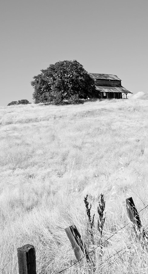 Old Barn in the Igo, Ono area