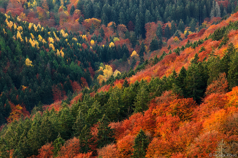 Photograph colorful autumnal forest by Patrick König on 500px