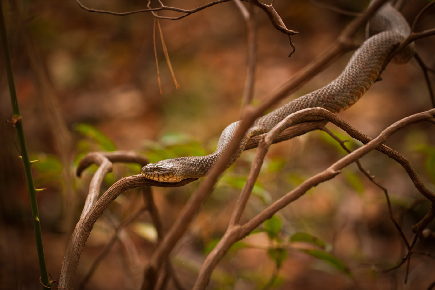 Photograph Copperhead by Brad Denny on 500px