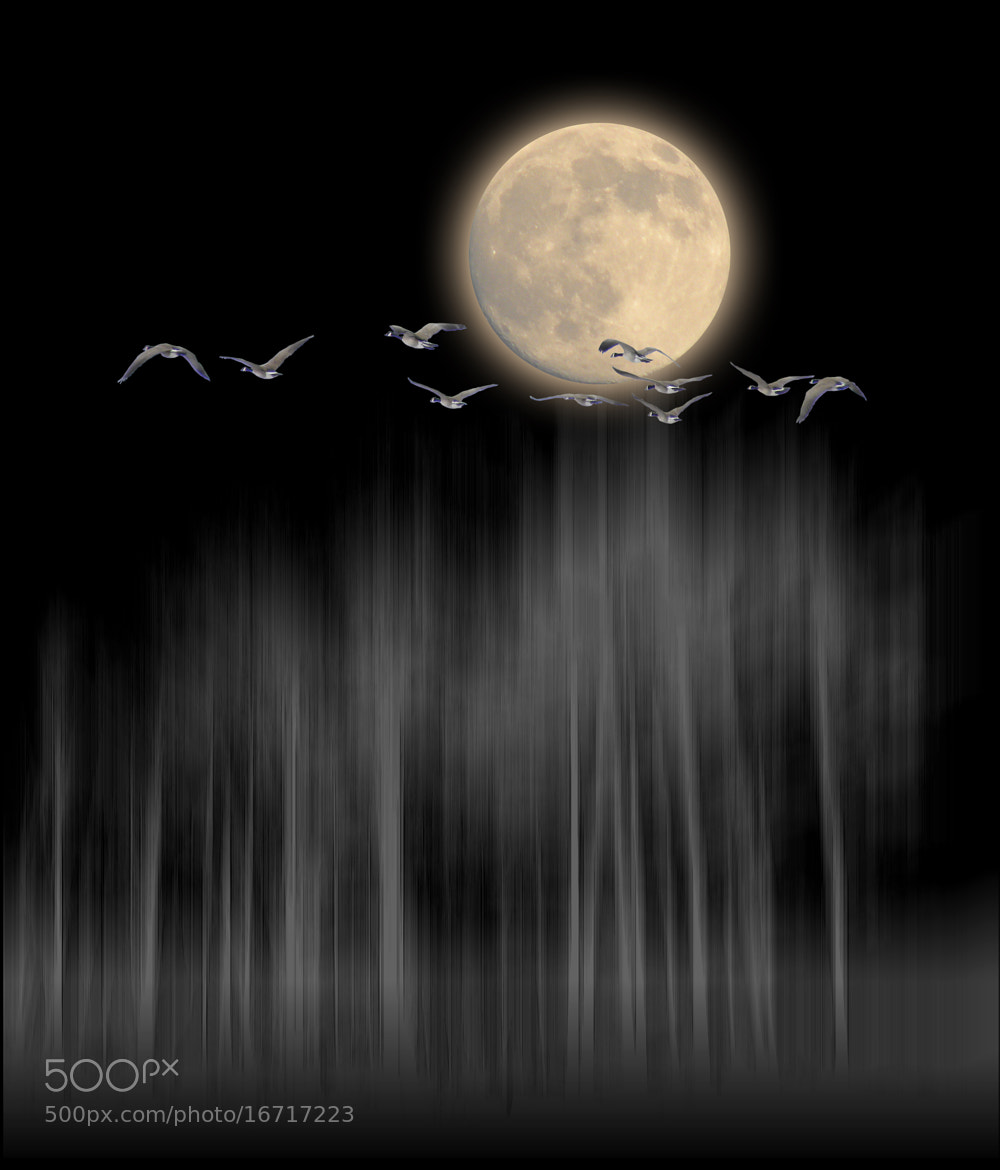 Photograph 2489 by peter holme iii on 500px