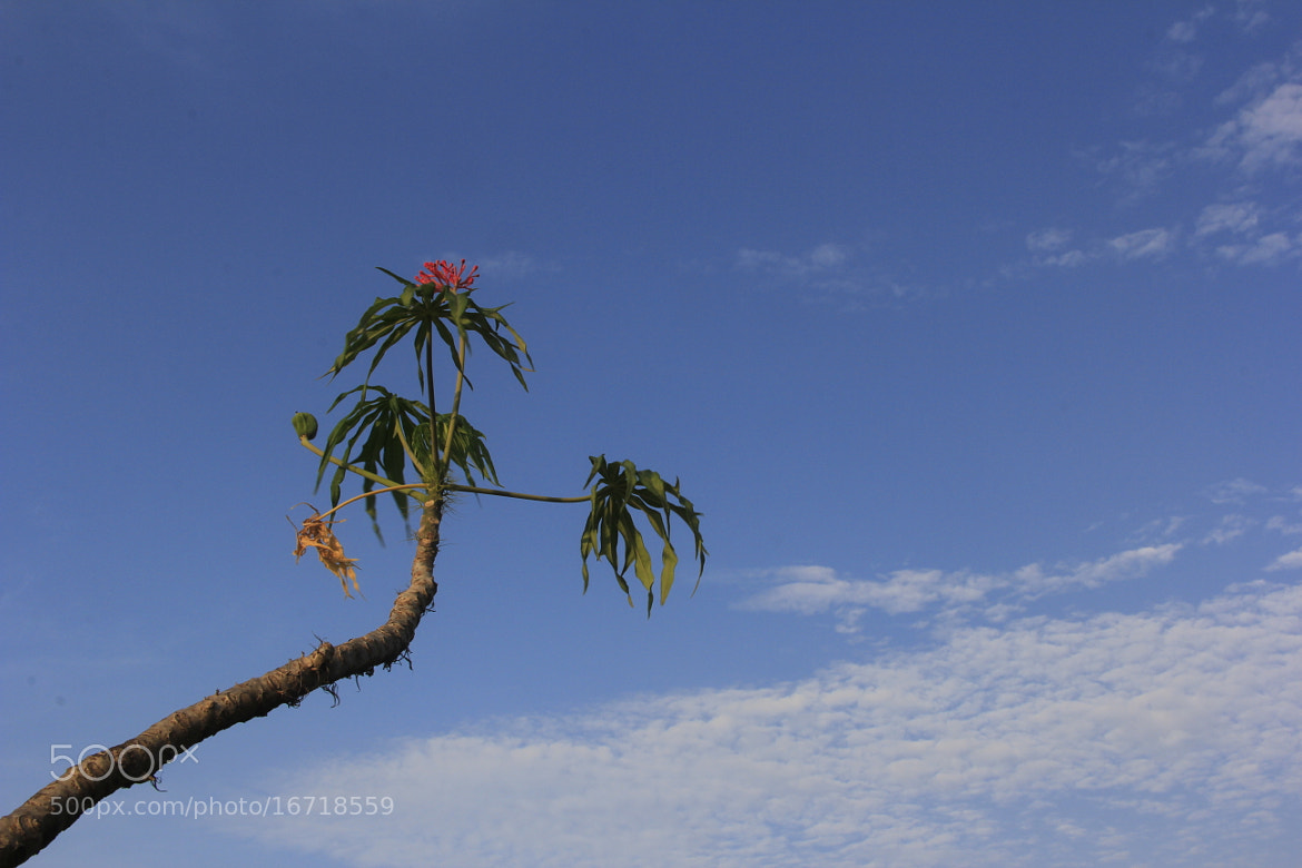 Photograph Blue Sky by Yusuf Tamami on 500px