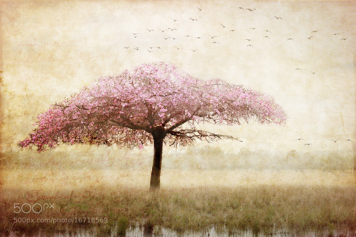 Photograph Dreaming by Margaret Hormann on 500px