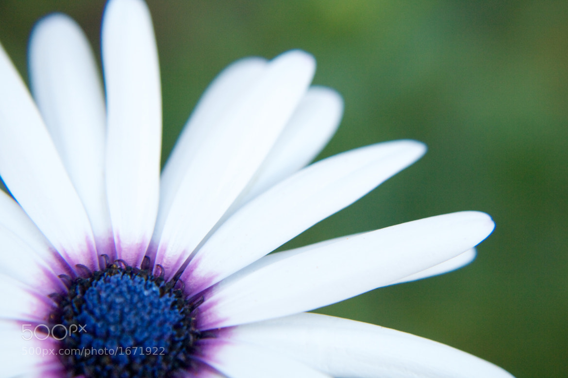 Photograph The beauty in small things by Darko Kontin on 500px
