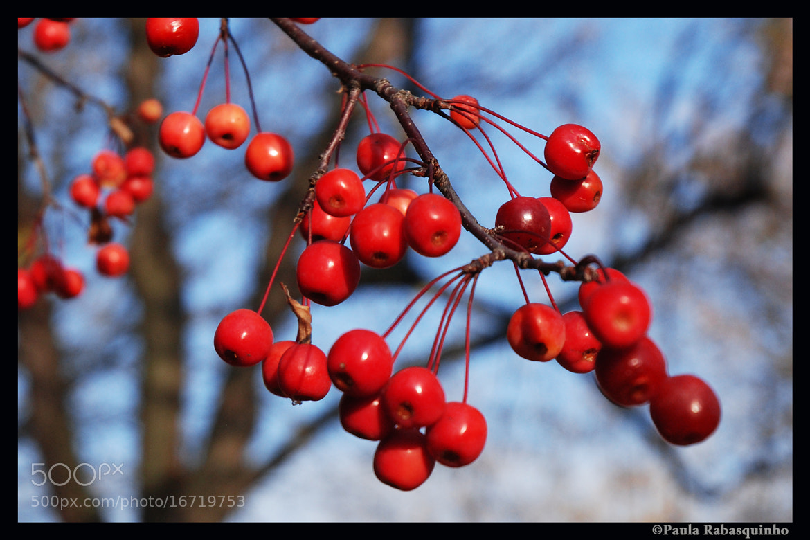 Photograph More Berries by Paula Rabasquinho on 500px