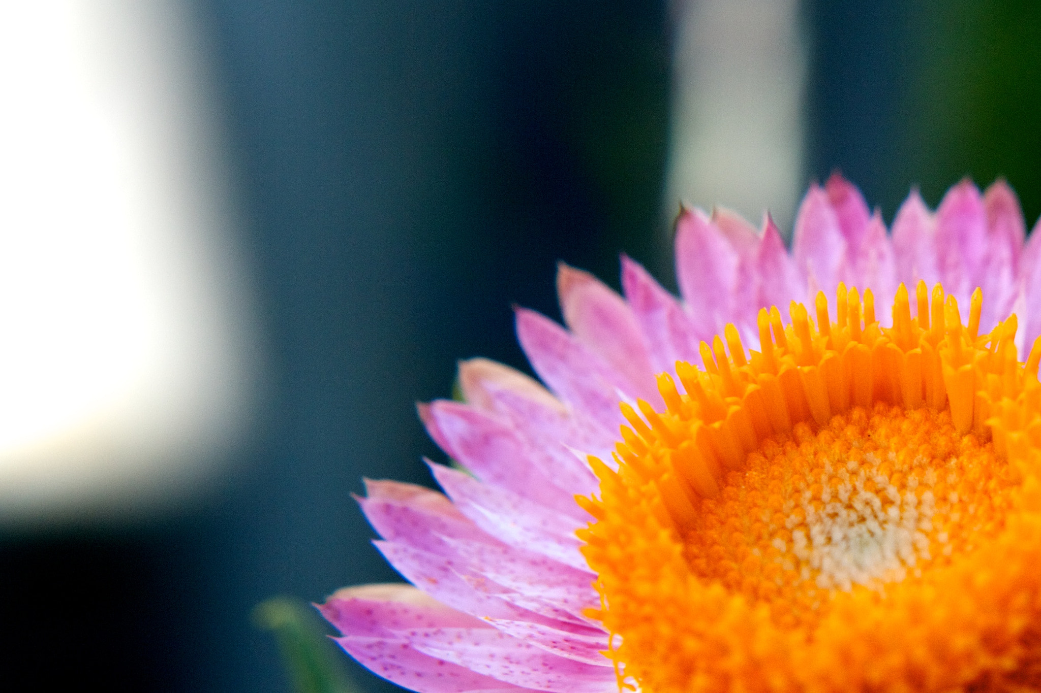 Photograph Flower with spots by Darko Kontin on 500px