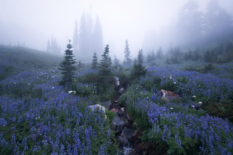 Secret Garden de Majeed Badizadegan sur500px.com