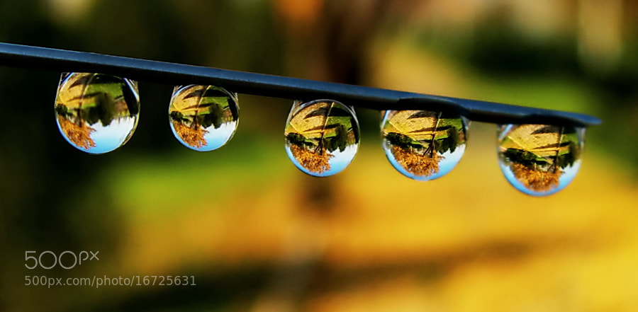 Photograph autumn in drops by tugba kiper on 500px