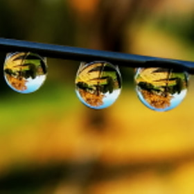 autumn in drops by tugba kiper (t_kiper)) on 500px.com
