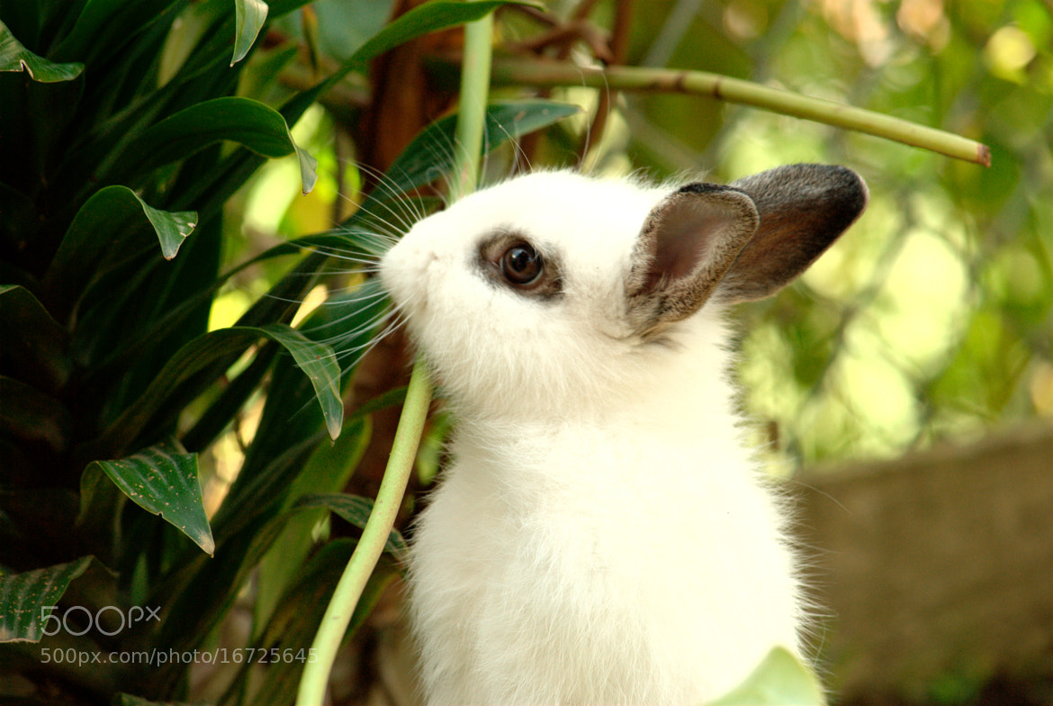 Photograph Bunny  by Ignacio Soto  on 500px