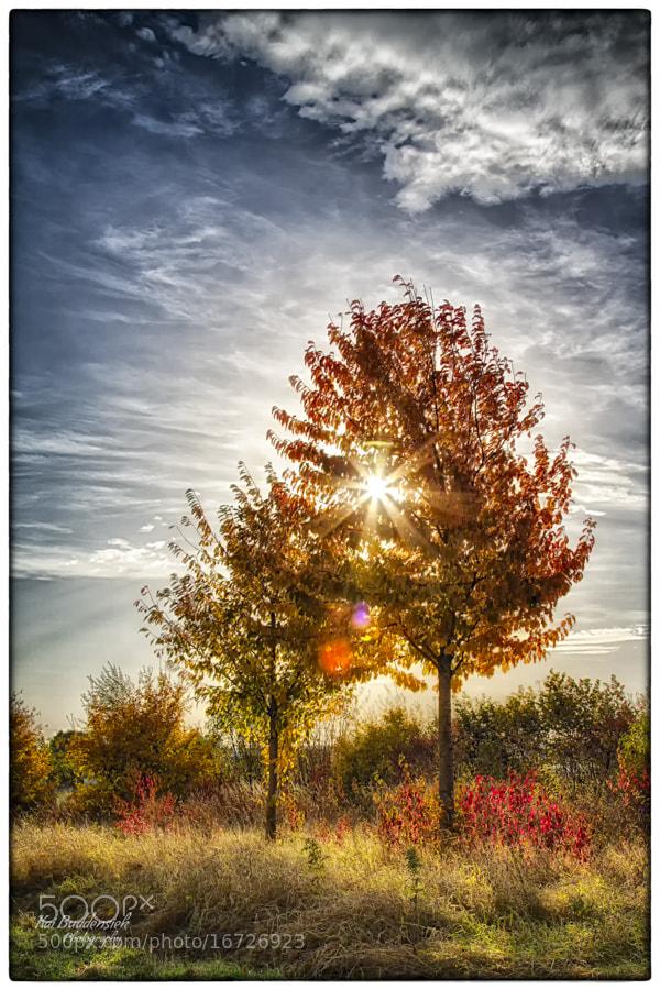 Photograph Autumn (3) by Kai Buddensiek on 500px
