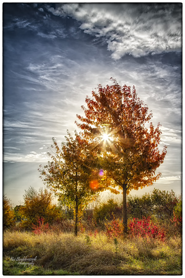 Photograph Autumn (3) by Kai Buddensiek on 500px