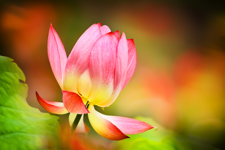 Moment of Glory by Sue Hsu on 500px.com