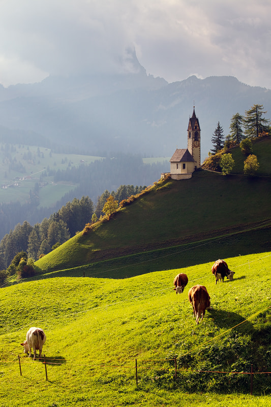 Photograph Pasture by Martin Rak on 500px