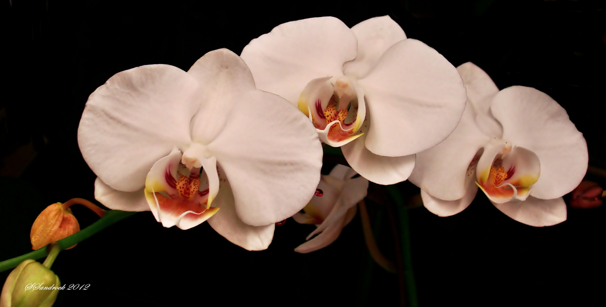Photograph The Orchid by Silvia Sandrock on 500px