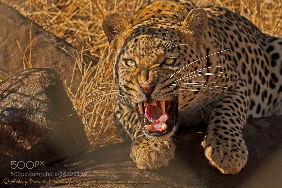 Photograph In No Uncertain Terms by Ashley Vincent on 500px