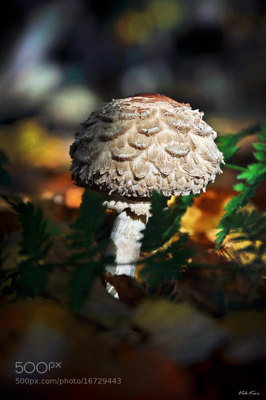 Photograph mushroom by Viktor Korostynski on 500px