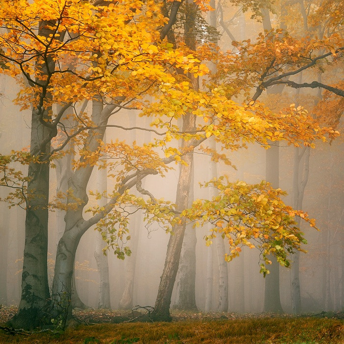 Photograph FAIRYLAND by TOMÁŠ MORKES on 500px