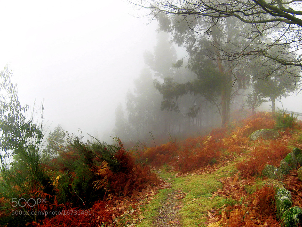 Photograph Mist dreams by Analua Zoé on 500px