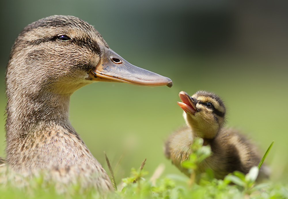 Photograph Mom, I need you by Stefano Ronchi on 500px