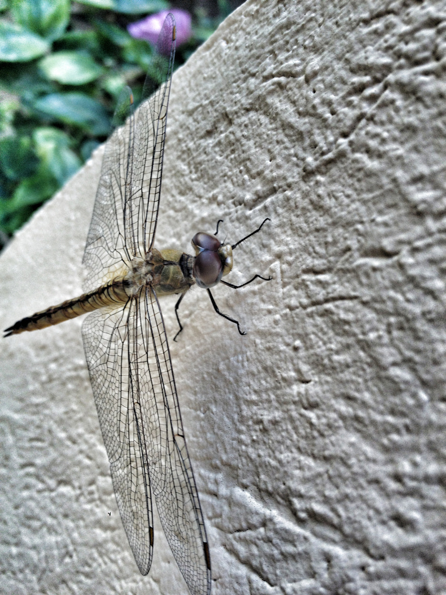 Photograph dragonfly by Nicole Henseler on 500px